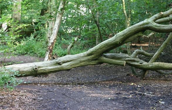 Fákat csavart ki, tetőket bontott a vihar a nyugati megyékben