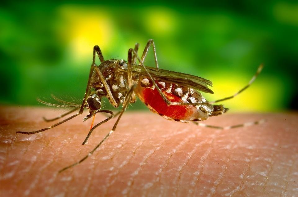 Új, veszélyes szúnyogfaj bukkant fel Magyarországon