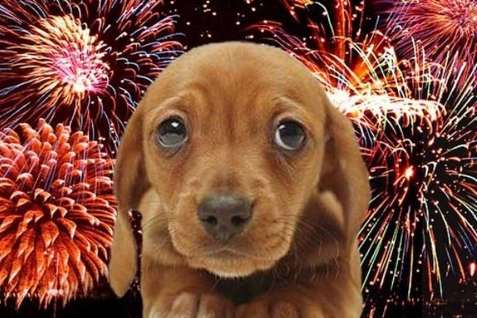 Pánikot okozhat a szilveszteri petárdázás a kutyáknál