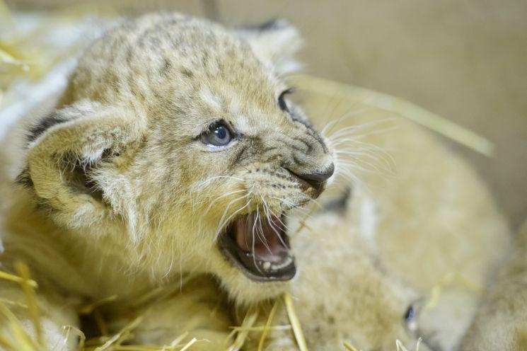 12 állatkert várja a látogatókat idén az Állatkertek éjszakáján