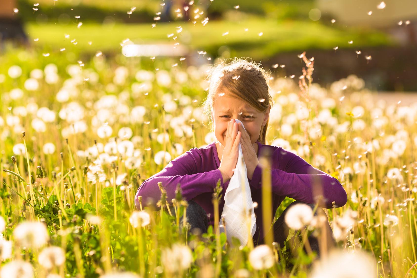 Ezért egyre kisebb a pollenek szerepe az allergiában