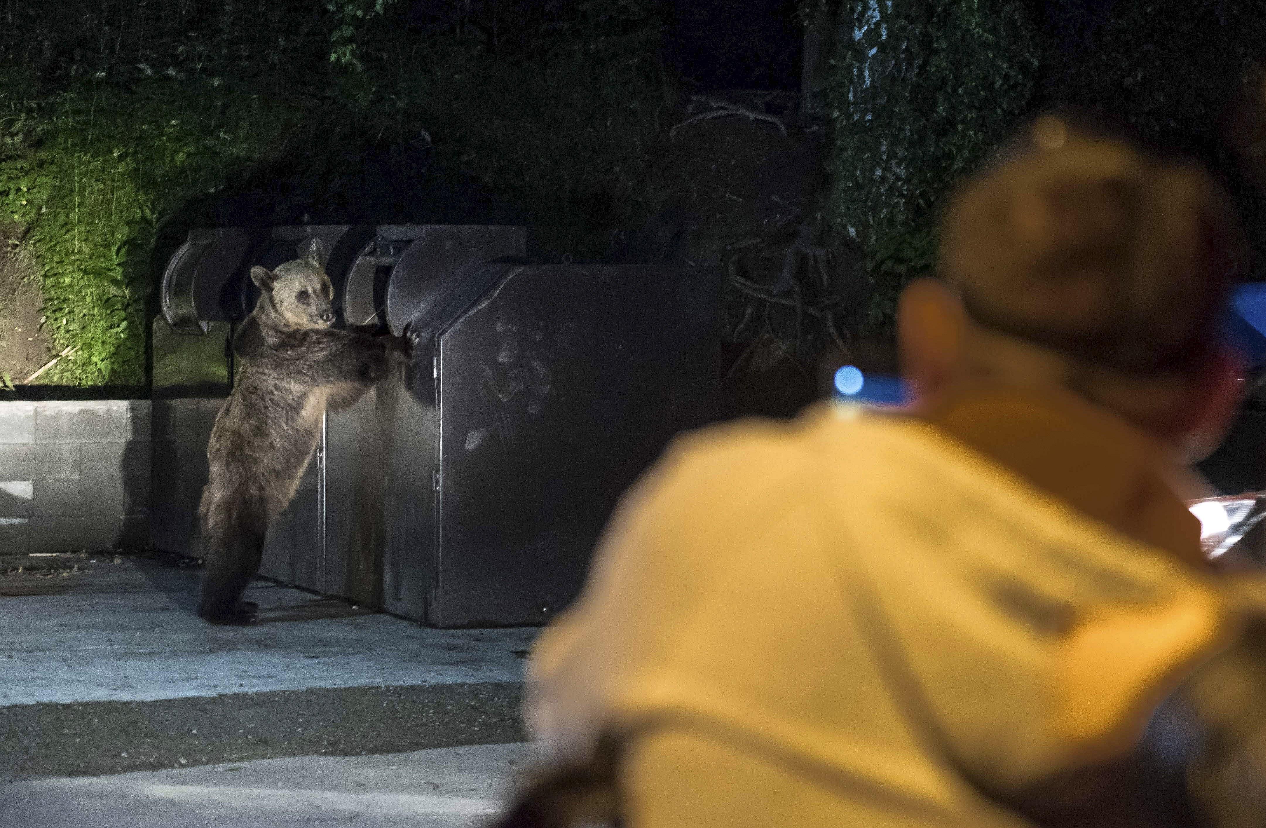 Mit tegyünk és mit ne tegyünk, ha egy kóborló medvével futnánk össze