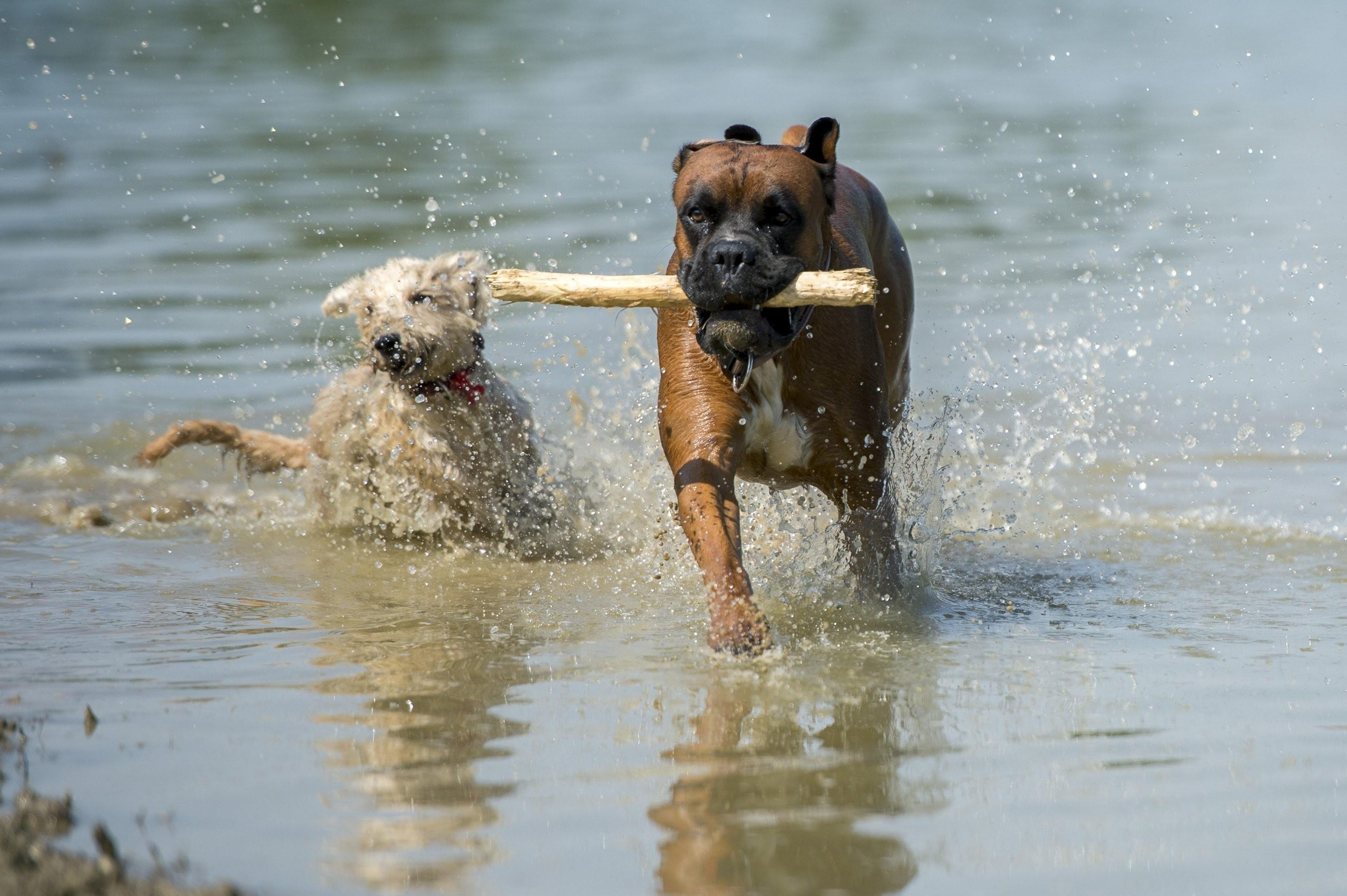 Itt a kutyák is strandolhatnak