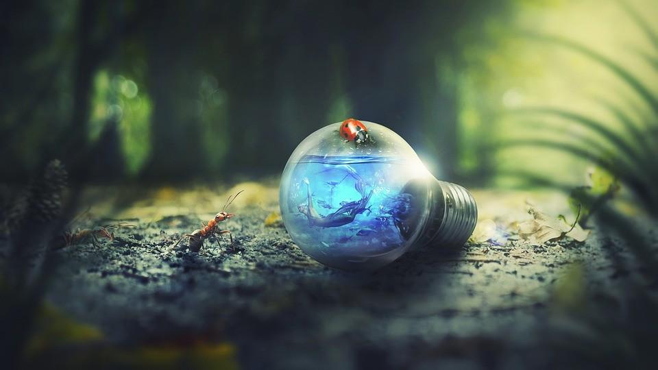 Veszélyezteti a vadvilágot némely LED-lámpa fénye