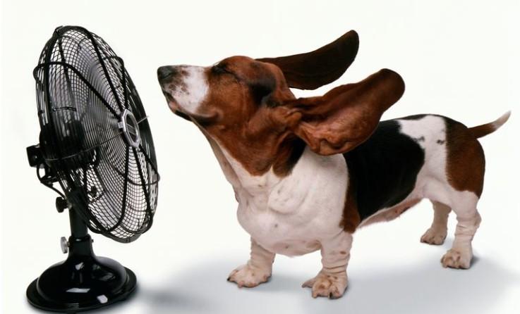A hőségben mindenki azonnali megoldást akar - Roham a ventilátorokért