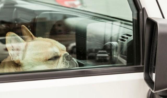 Figyelmeztették, mégis a forró kocsiban hagyta kutyáit
