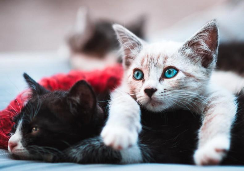 Minél értelmesebbnek tartja macskáját, annál többet fog nyávogni