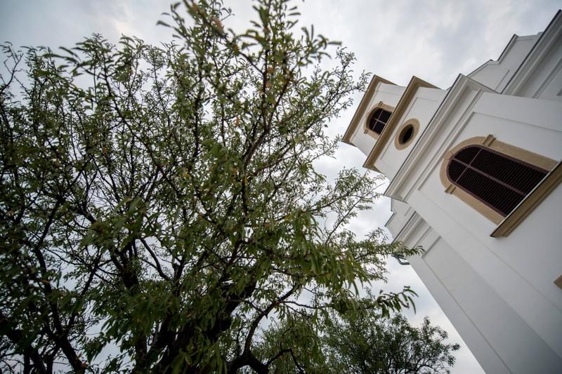 A pécsi havihegyi mandulafa lett 2018-ban az év fája