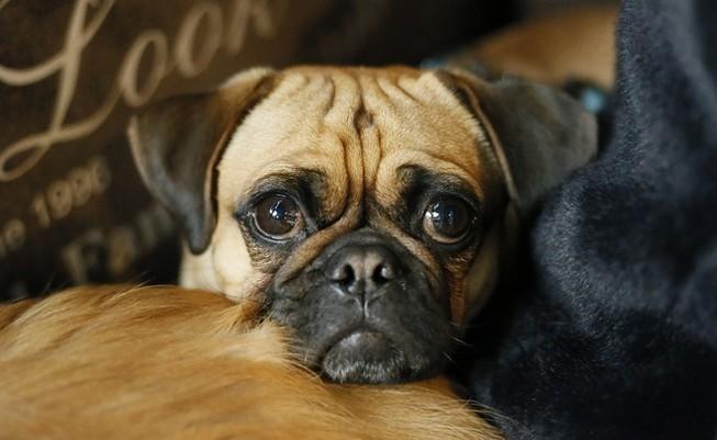 A kutya viselkedéséért a körülötte élő emberek, a kutya gazdája felel