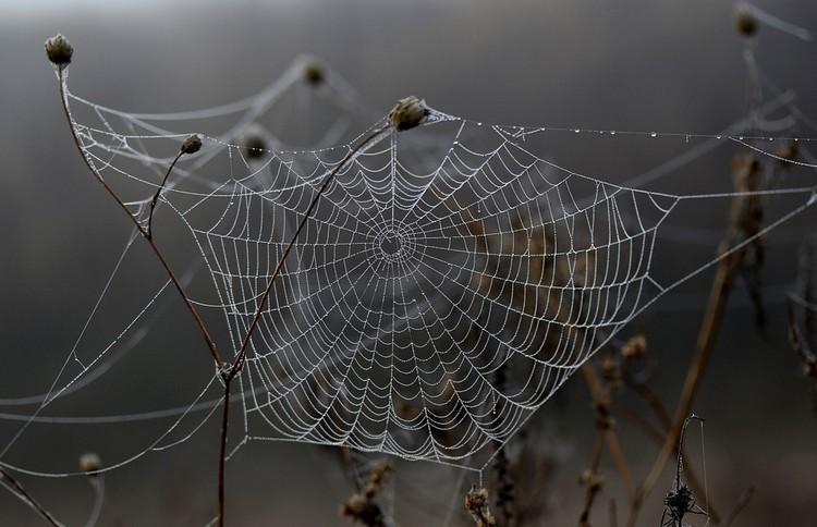 Mi a közös a galambokban és a pókokban?