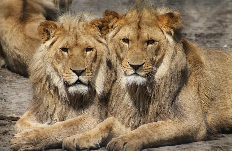 Kiderült, hány állat van a budapesti állatkertben