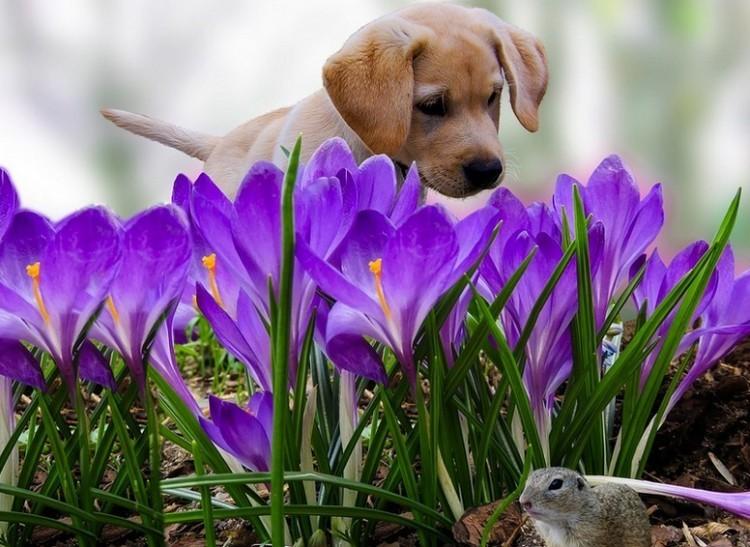 Ilyen időjárásra számíthat március 1-jén, a meteorológiai tavasz első napján