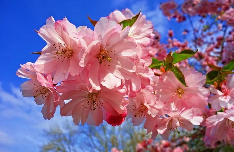 Április havi időjárási megfigyelések, hiedelmek és babonák