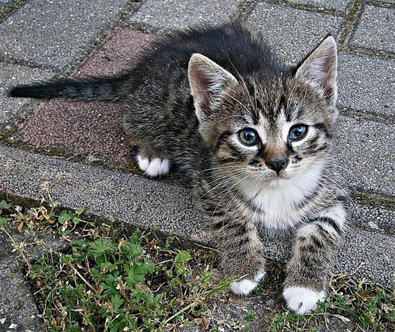 Fele részben örökletes a macskák viselkedése