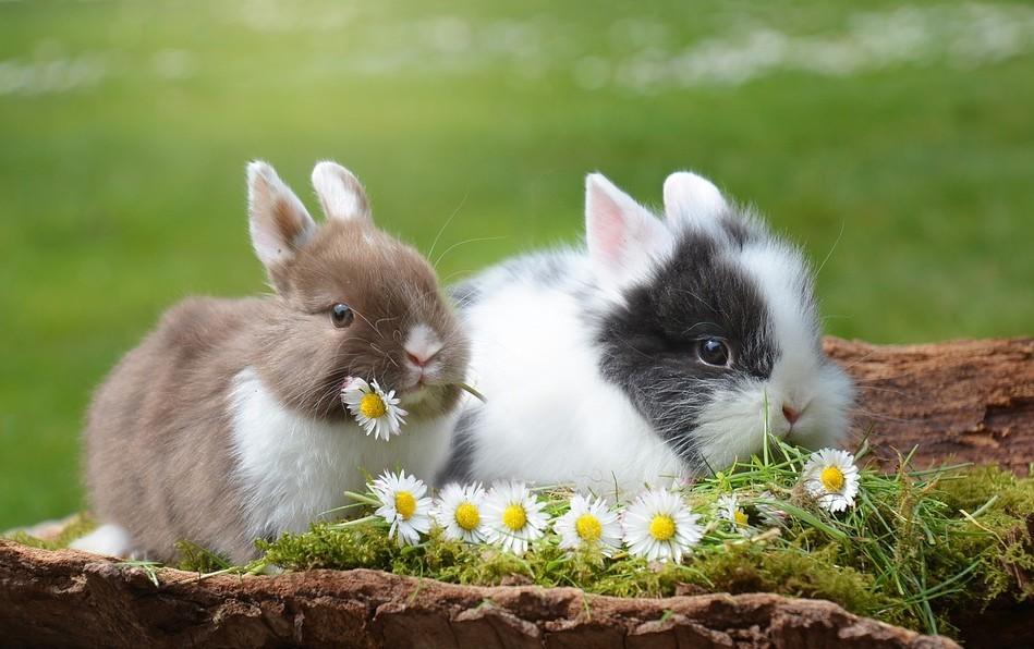 Húsvét - Minden, amit a húsvéti ünnepről tudni kell