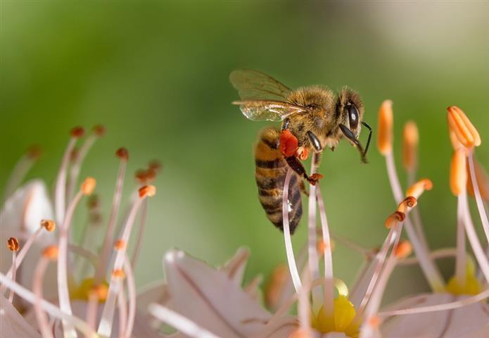Keresik, mi okozta a tavalyi tömeges méhpusztulást