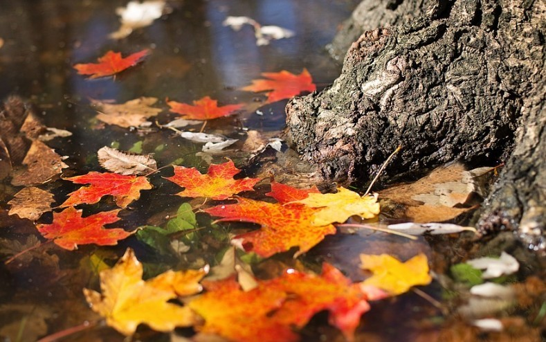 Ilyen időjárás várható a hétvégén - Előrejelzés november 1-ig