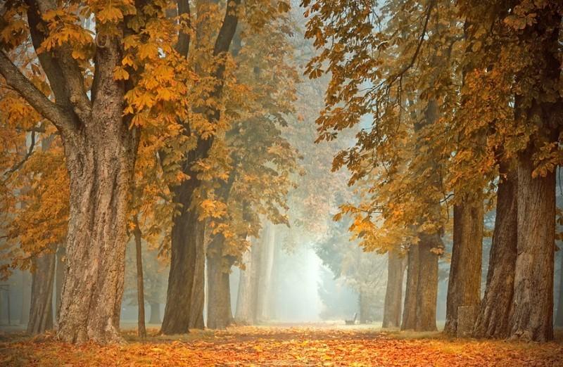 Időjárás-előrejelzés november 8-10-ig - Itt a friss előrejelzés a hétvégére