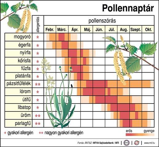 Pollenek, pollenszezon 2020