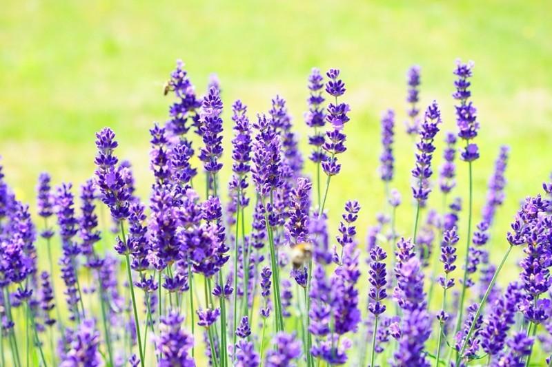 Növények, illatok és egyéb praktikák a szúnyogok ellen