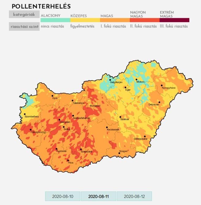 Kezdődik a parlagfűszezon: Magas, néhol nagyon magas a pollenkoncentráció