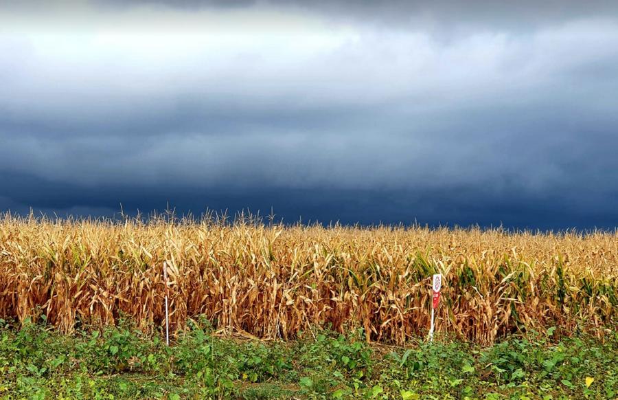 Időjárás-előrejelzés keddre, Mihály-napjára - Kiderül, milyen lesz az ősz és a tél