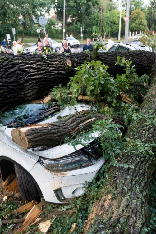 Vihar - Autóra borult fa vihar után Nyíregyházán - MTI Balázs Attila